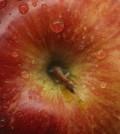 food-health13