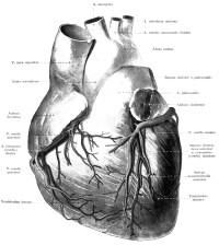 heart-cardio10