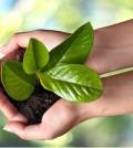 Environmental Growth.